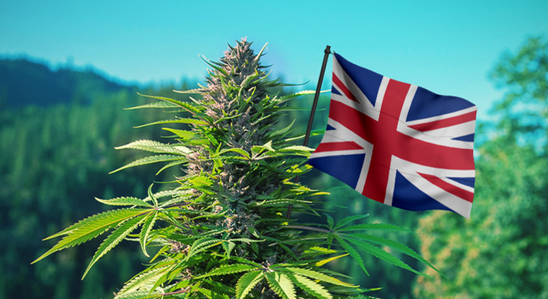My Predictions for Cannabis in the UK in 2021 | Peter Reynolds